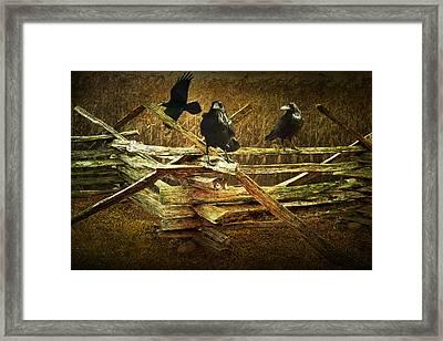 Raven Crows On A Split Rail Fence Framed Print