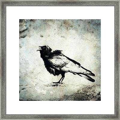 Raven On Blue Framed Print by Carol Leigh