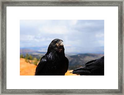 Raven Portrait Framed Print by Donald Fink