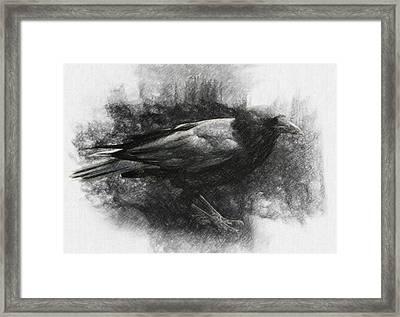 Raven Framed Print by Taylan Apukovska