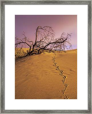 Raven Tracks Across The Sand Dune Framed Print by Robert L. Potts