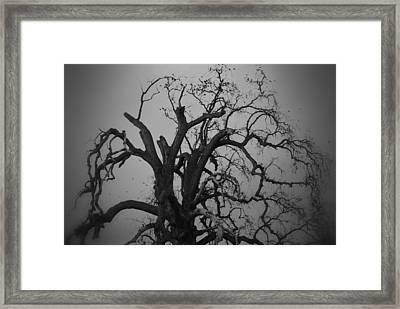 Raven Tree Framed Print