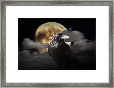 Raven Under The Harvest Moon Framed Print