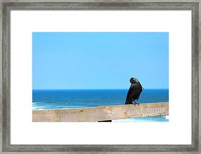 Framed Print featuring the photograph Raven Watching by Peta Thames
