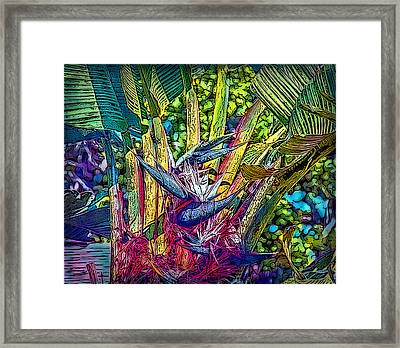 Framed Print featuring the photograph Ravenala by Hanny Heim