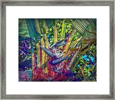 Ravenala Framed Print by Hanny Heim