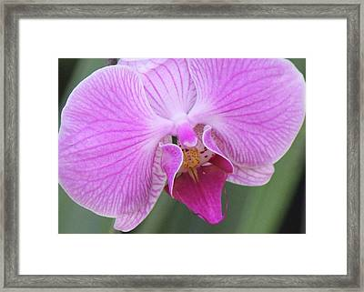Ravenous Orchid Framed Print by Bill Woodstock