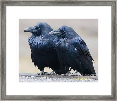 Ravens Framed Print