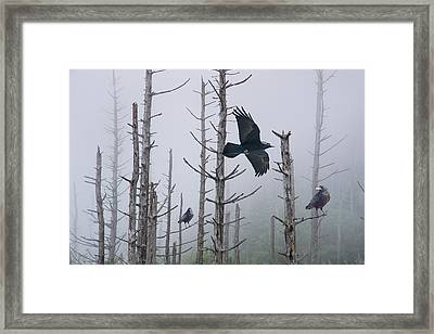 Ravens Of The Mist Framed Print by Randall Nyhof