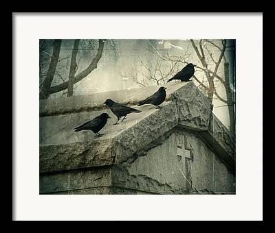 Crows Mingling Photographs Framed Prints