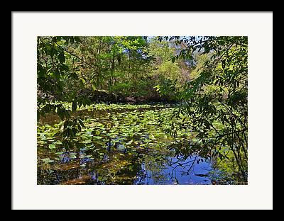 Palatka Framed Prints