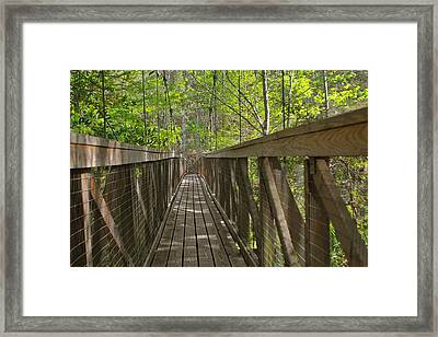 Ravine Gardens - Florida's Hidden Treasure Framed Print by Christine Till