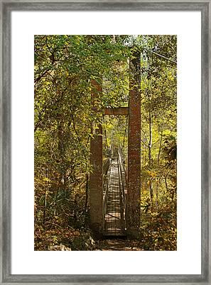 Ravine Gardens State Park In Palatka Fl Framed Print by Christine Till