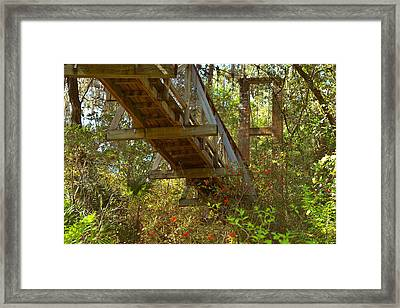 Ravine State Gardens Palatka Florida Framed Print by Christine Till