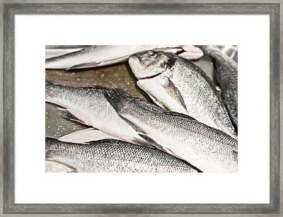 Raw Fish Framed Print by Tom Gowanlock