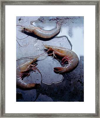 Raw Shrimp Framed Print