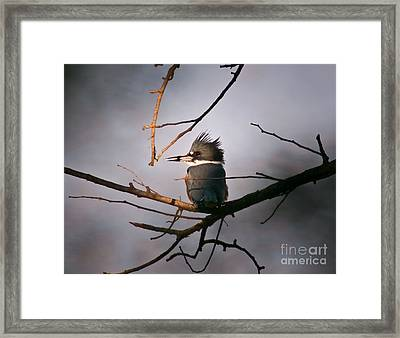 Ray Of Light On Kingfisher Framed Print by Robert Frederick