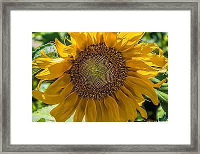 Ray Of Sun Framed Print