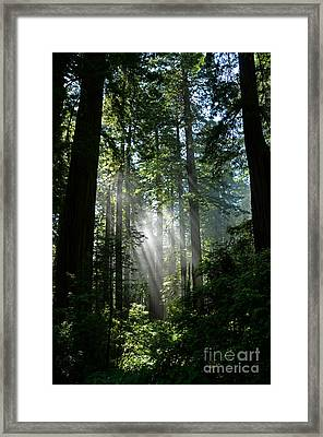 Rays In Redwoods Framed Print