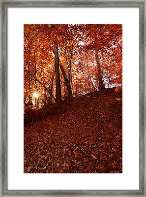Rays Of Leaves Framed Print by Lourry Legarde