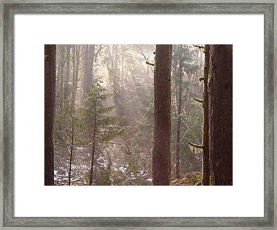 Rays Of Light In Forest Framed Print by Myrna Walsh