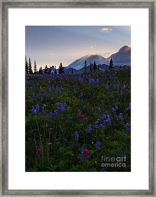Rays Over Rainier Framed Print