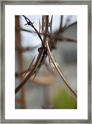Razor Wire Framed Print by Peter Tellone