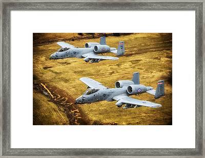Razorback Warthogs Framed Print by Mountain Dreams