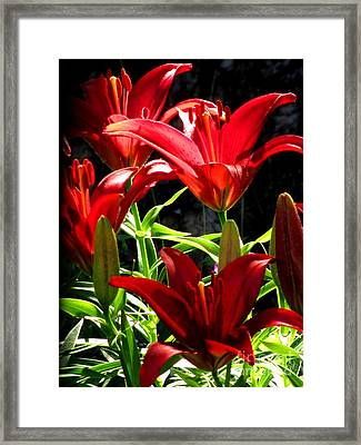 Razzle Dazzle Reds Framed Print by Marilyn Smith