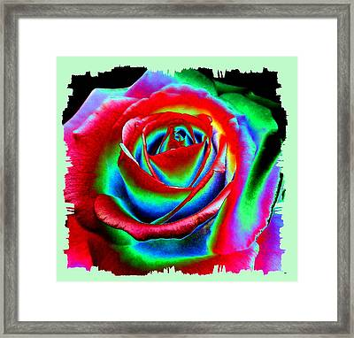 Razzle Dazzle Rose Framed Print