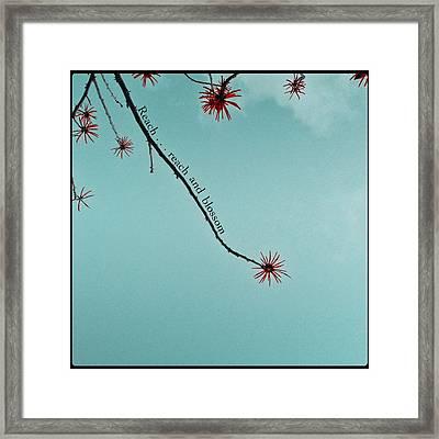 Reach And Blossom Framed Print