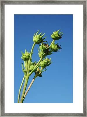 Reach Framed Print by Christi Kraft