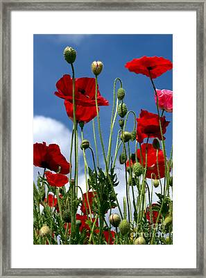Framed Print featuring the photograph Reach For The Sky by Baggieoldboy