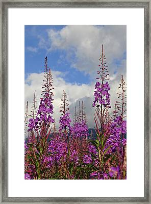 Framed Print featuring the photograph Reach For The Sky by Cathy Mahnke