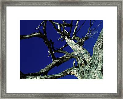Framed Print featuring the photograph Reach For The Sky by Janice Westerberg
