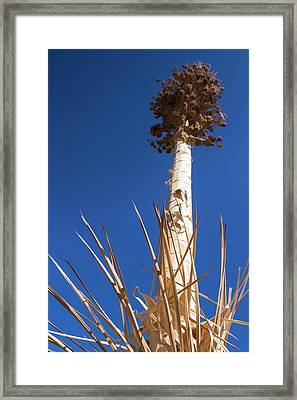 Reach For The Sky Framed Print by Scott Campbell