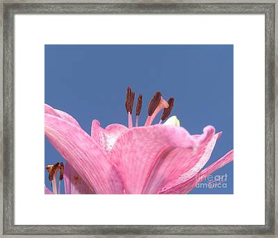 Reach For The Sky - Signed Framed Print