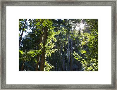 Reach Framed Print by Linda Lees