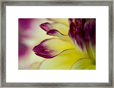 Reach Out Framed Print by Mary Jo Allen