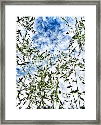Reach To The Sky Framed Print