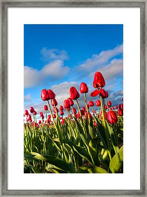 Reach To The Sky Framed Print by Matt Dobson