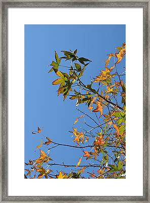 Reach Up Framed Print