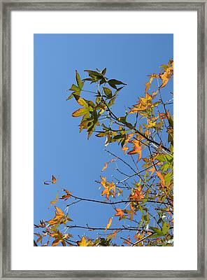 Reach Up Framed Print by Regina Avila