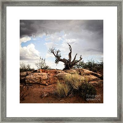 Reaching Framed Print by Cheryl McClure