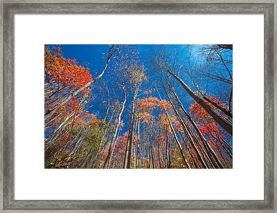 Reaching Color Framed Print by Scott Moore