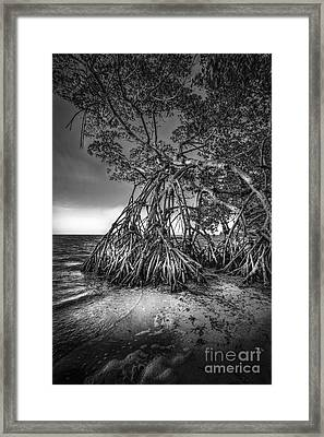 Reaching For Earth And Sky-bw Framed Print by Marvin Spates