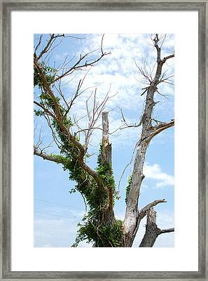 Reaching For The Clouds Framed Print