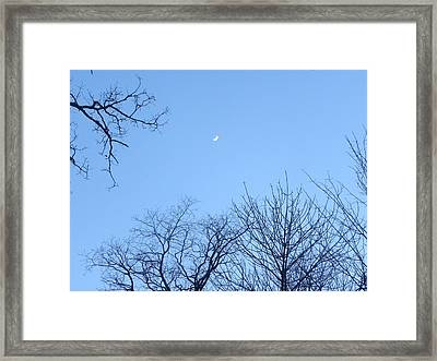 Reaching For The Moon Framed Print by Cim Paddock
