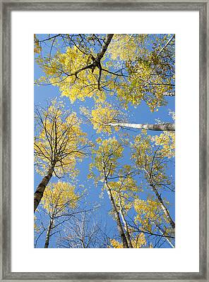 Reaching For The Sky 1 Framed Print