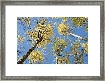Reaching For The Sky 2 Framed Print